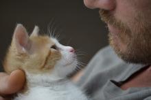 7 способов заставить кошку полюбить вас