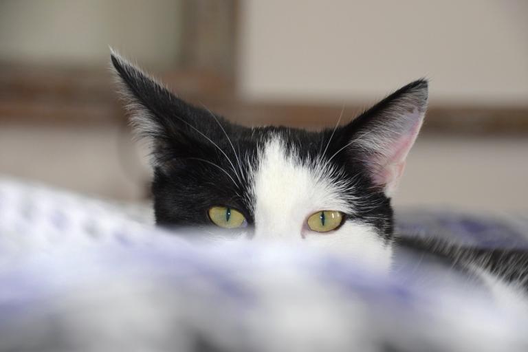 Кастрация кота: как это происходит